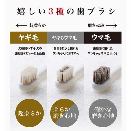 【たっぷり使った100%天然毛で歯を守る!】ミガケンデ三種
