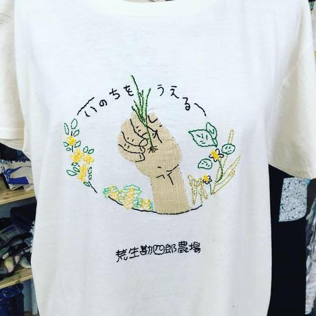 アチャオ米/亀の尾(10枚入り)