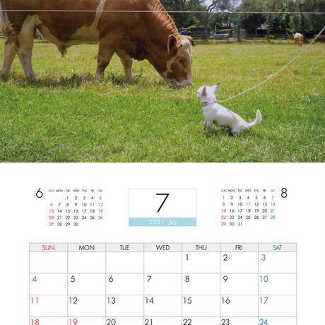 【予約販売】 ちわわん生活 2021年 壁掛けカレンダー KK21036