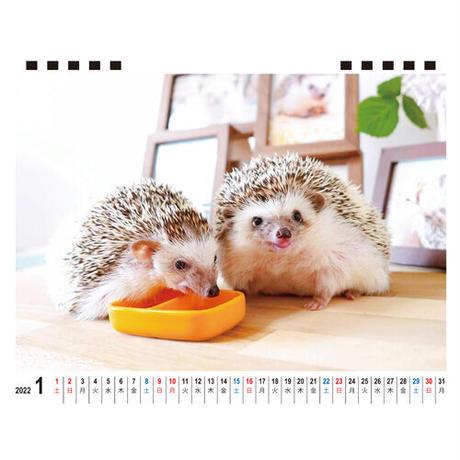 【予約販売】 ハリネズミ レイとラニ 2022年 卓上 カレンダー TC22136