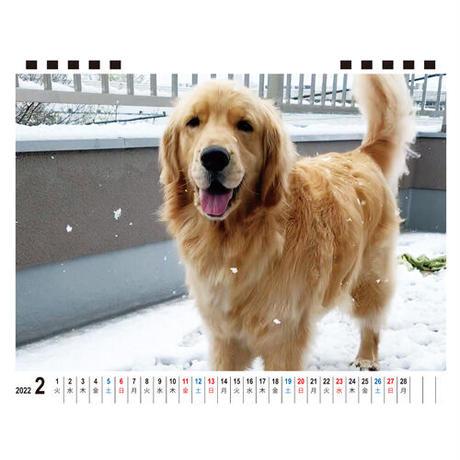 【予約販売】 ゴールデンレトリバー コメ 2022年 卓上 カレンダー TC22119