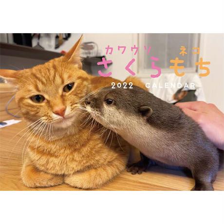 【予約販売】 カワウソ 猫 もち 2022年 壁掛け カレンダー KK22100