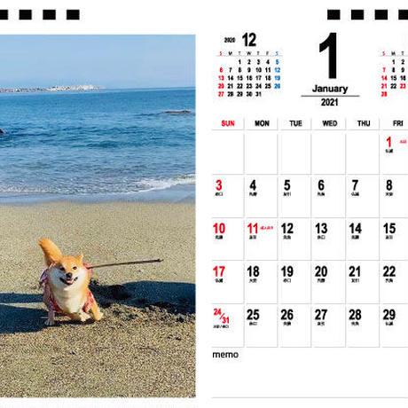【予約販売】 柴犬 こさめ 2021年 卓上カレンダー TC21088