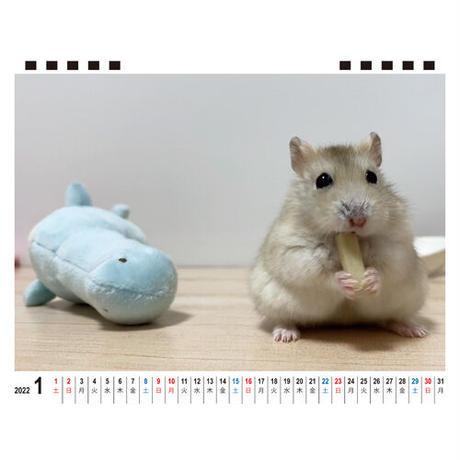【予約販売】 ハムスター ココ&ナッツ CHANNEL 2022年 卓上全面 カレンダー TC22012
