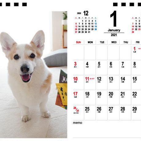 【予約販売】 コーギー ノエさん 2021年 卓上カレンダー TC21064