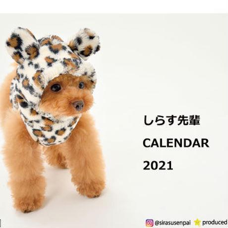 【予約販売】 トイプードル しらす先輩 2021年 卓上カレンダー TC21039