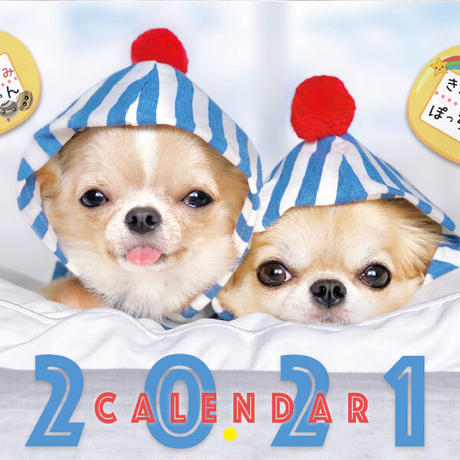 【予約販売】 チワワ POPO&POM 2021年 壁掛けカレンダー KK21029