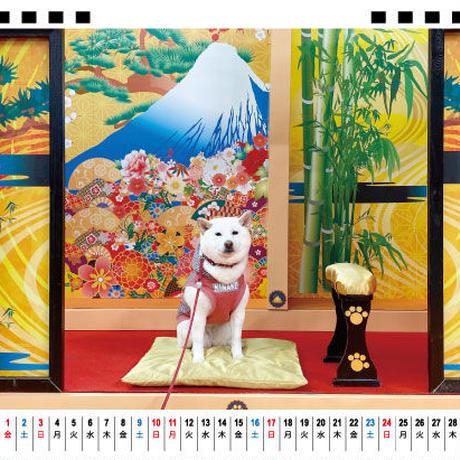 【予約販売】 白柴 きなこ 2021年 卓上カレンダー TC21071