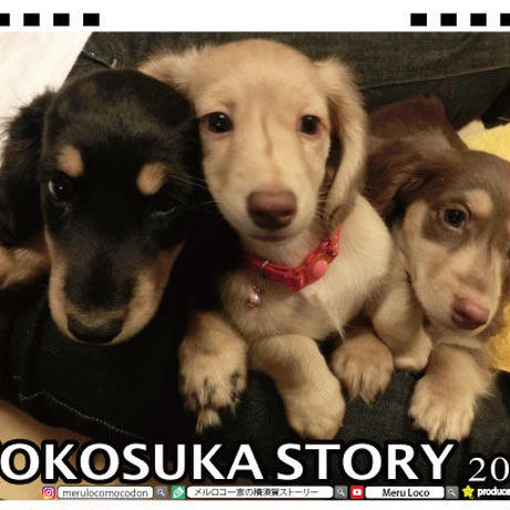 【予約販売】 メルロコ一家の横須賀ストーリー 2021年 卓上カレンダー TC21099