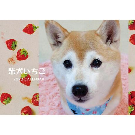 【予約販売】 柴犬いちご 2022年 壁掛け カレンダー KK22026