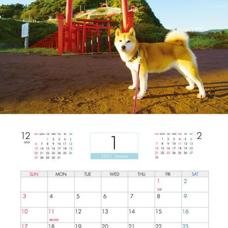 【予約販売】 柴犬 小春 2021年 壁掛けカレンダー KK21015