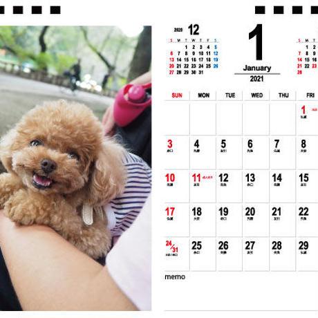 【予約販売】 トイプードル anne 2021年 卓上カレンダー TC21123