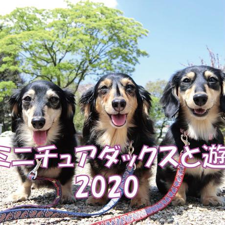【送料無料】2020年『ミニチュアダックスと遊ぼ』壁掛けカレンダー