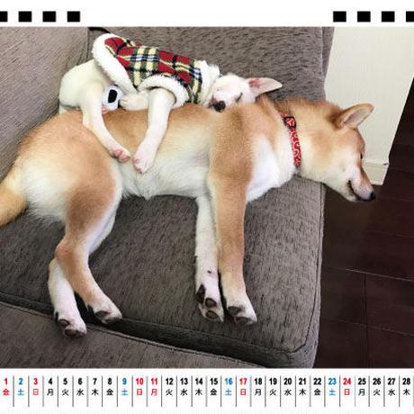 【予約販売】 柴犬 ハルとすず 2021年 卓上カレンダー TC21092