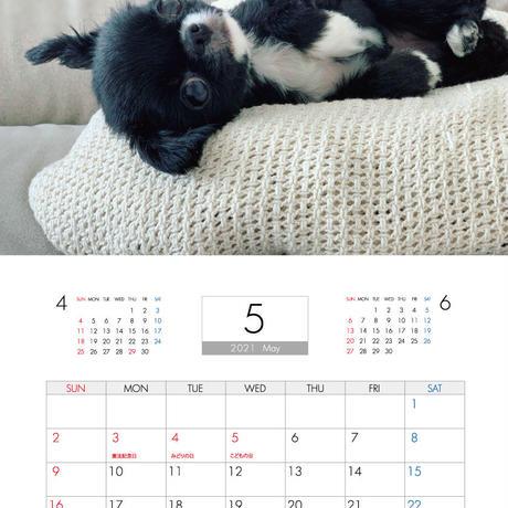 【予約販売】 チワワ TORO&UNI 2021年 壁掛けカレンダー KK21020