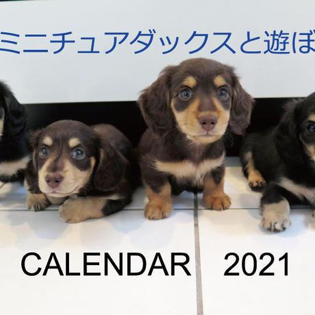 【予約販売】 ミニチュアダックスと遊ぼ 子犬 2021年 壁掛けカレンダー KK21002