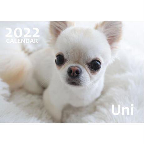 【予約販売】 チワワ Uni 2022年 壁掛け カレンダー KK22005