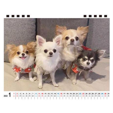 【予約販売】 チワワのくま・なつ・のん・桃・MIKI 2022年 卓上 カレンダー TC22117