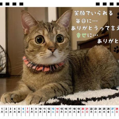 【予約販売】 マンチカン姉弟 茶葉&茶太 2021年 卓上カレンダー TC21136