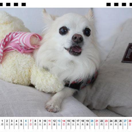 【予約販売】 ちわわん生活 2021年 卓上カレンダー TC21037