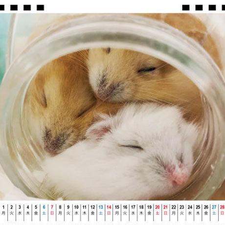 【予約販売】 ハムスター ココ&ナッツ CHANNEL 2021年 卓上カレンダー TC21091