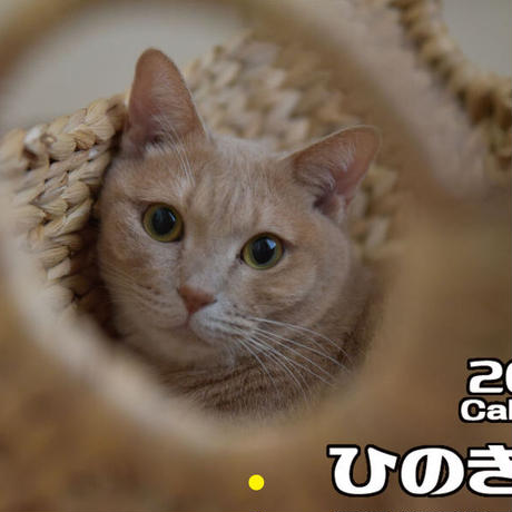 【予約販売】 ひのき猫 2021年 壁掛けカレンダー KK21056