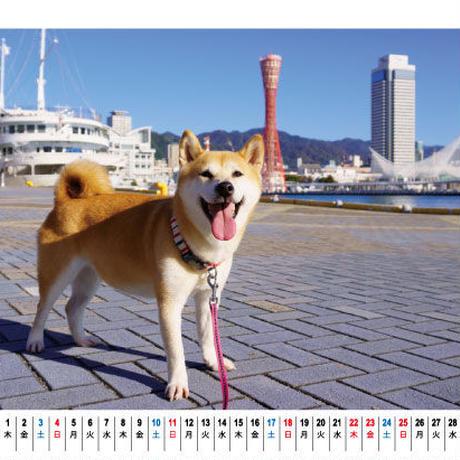 【予約販売】 柴犬 小春 2021年 卓上カレンダー TC21016