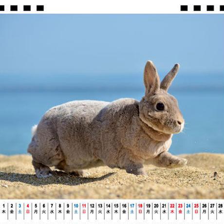 【予約販売】 ウサギ OLIVE 2021年 卓上カレンダー TC21134