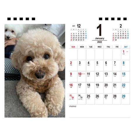 【予約販売】 トイプードル いちご&ミルク 2022年 卓上 カレンダー TC22144