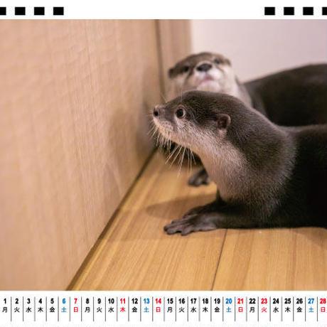 【予約販売】 カワウソ 竹千代 2021年 卓上カレンダー TC21044