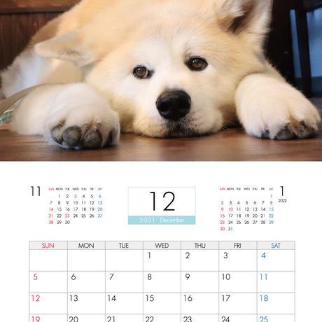 【予約販売】 秋田犬 パティ 2021年 壁掛けカレンダー KK21084