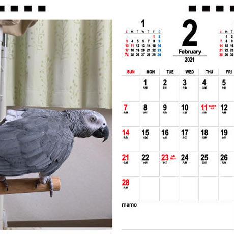 【予約販売】 ヨウムのるいちゃん 2021年 卓上カレンダー TC21116