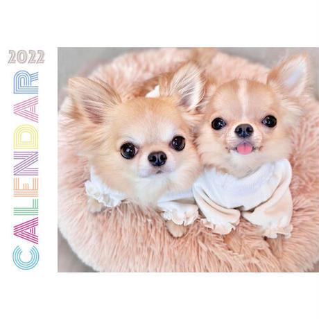 【予約販売】 チワワ POPO&POM 2022年 壁掛け カレンダー KK22001
