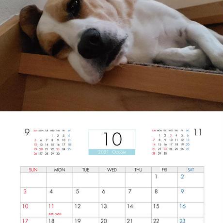 【予約販売】 ビーグル犬 うぃるさん 2021年 壁掛けカレンダー KK21074
