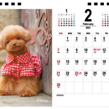 【予約販売】 トイプードル sano 2021年 卓上カレンダー TC21104