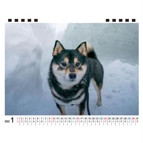 【予約販売】 柴犬 acoshiba 2022年 卓上 カレンダー TC22069