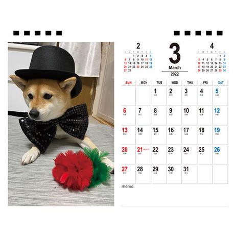 【予約販売】 柴犬のはんなり柴わんこミッキーちゃん 2022年 卓上 カレンダー TC22120