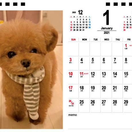 【予約販売】 トイプードル miu 2021年 卓上カレンダー TC21108