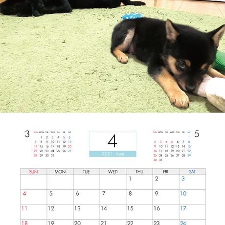 【予約販売】 まいにち ほごねこ ときどき いぬ 2021年 壁掛けカレンダー KK21127