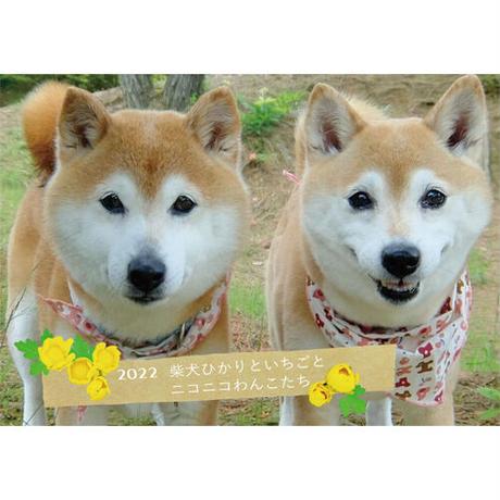 【予約販売】柴犬ひかりといちごとおともだち 2022年 壁掛け カレンダー KK22029