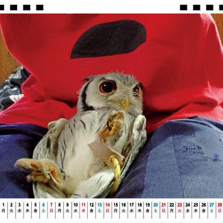 【予約販売】 アフリカオオコノハズクのホロの一年 2021年 卓上カレンダー TC21113