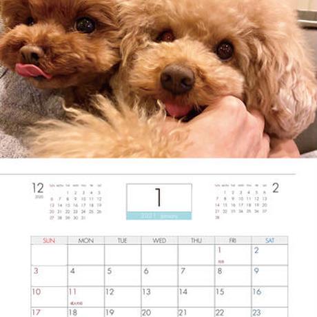 【予約販売】 プードル dino&sena 2021年 壁掛けカレンダー KK21048
