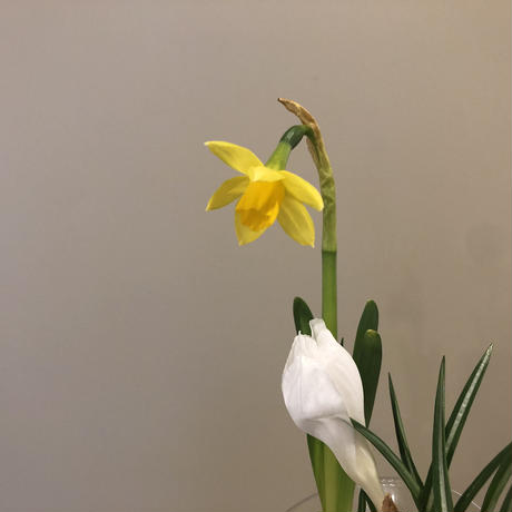 球根花と花瓶のSET  L  vol,2