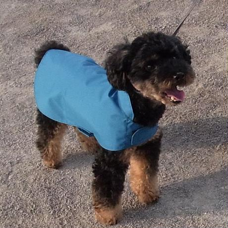 小型犬用レインコート