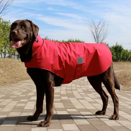 大型犬用レインコート