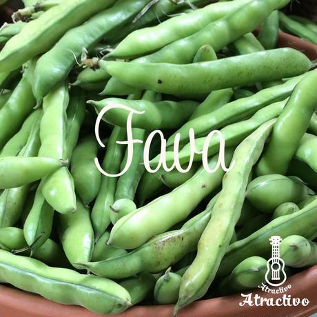 白ワインに最適イタリア生まれのかわいいそら豆 ファーベの種