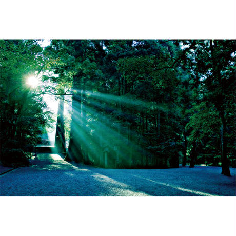 神宮の森に注ぐ陽光(Sサイズ)