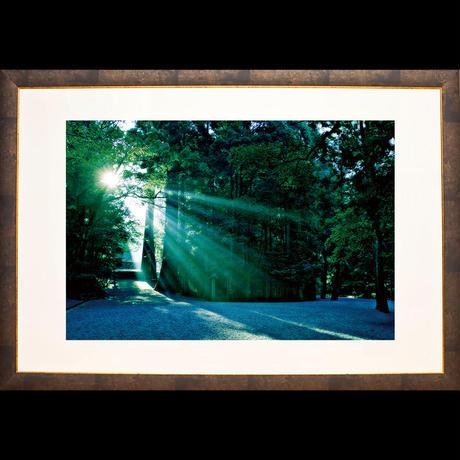 神宮の森に注ぐ陽光(Mサイズ)