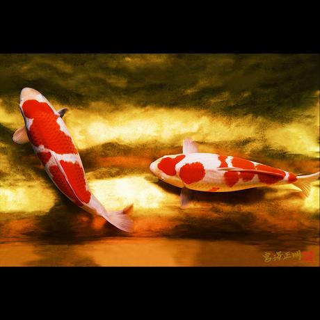 <フォトアクリル>「紅白_II」(Sサイズ)