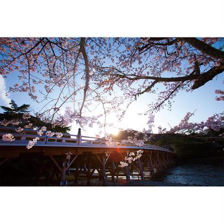 春の宇治橋(LLサイズ)